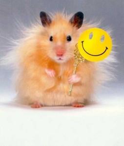 Flute-Hamster-hamsters-29682529-424-500